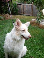 https://sites.google.com/a/collierescue.ca/ocr-ga/adopted-dogs/junebug