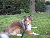 https://sites.google.com/a/collierescue.ca/ocr-ga/available-collies/charlie