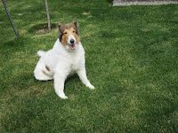 https://sites.google.com/a/collierescue.ca/ocr-ga/memorial-angel