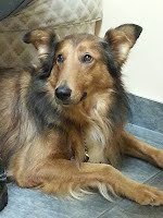 https://sites.google.com/a/collierescue.ca/ocr-ga/adopted-dogs/wally